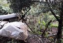 Tin trong nước - Gia Lai: Đi phát cỏ trúng dây điện trong vườn nhà, cụ ông 81 tuổi bị điện giật tử vong