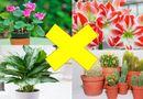Đời sống - Những loại cây đẹp mấy cũng không trồng trong nhà tránh tiêu tán tài lộc, rước bệnh cho gia đình