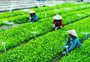 Thực phẩm - Kinh tế hợp tác, bản chất của Hợp tác xã nông nghiệp và lợi ích mang lại