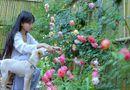 Giải trí - Về quê nấu ăn, làm nông, cựu DJ Lý Tử Thất trở thành triệu phú ở tuổi 29