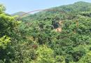 Xã hội - Chí Linh, Hải Dương: Cần làm rõ nghịch lý rừng dẻ bị