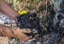"""Tin trong nước - Vụ nước sạch Sông Đà nhiễm bẩn: """"Họ đã né tránh một phần trách nhiệm"""""""