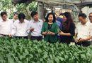 Xã hội - Về mô hình mở đường cho kinh tế hợp tác phù hợp với  trình độ của kinh tế hộ nông dân