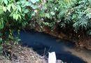 Vụ nước sạch Sông Đà nhiễm dầu: Triệu tập 2 người liên quan