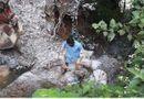 Đời sống - Nghệ An: Phát hiện nhiều bao tải chứa đầy xác lợn bị vứt bỏ dưới cống