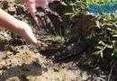 Tin trong nước - Cận cảnh bùn đen bám quanh suối trước cửa súc xả bể chứa nước sông Đà