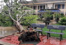 Tin trong nước - Hơn 1 triệu học sinh nghỉ học để tránh bão số 6
