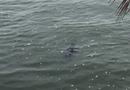 Tin trong nước - Hà Nội: Bàng hoàng phát hiện thi thể nổi trên mặt hồ Tây