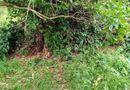 Tin trong nước - Vụ phát hiện thi thể không nguyên vẹn trong vườn điều: Tim thấy phần đầu của nạn nhân