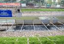 Tin trong nước - JEBO sẽ đầu tư 100% chi phí cho việc làm sạch sông Tô Lịch?