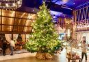 Đời sống - Cây thông Noel đắt nhất thế giới, giá 15 triệu USD có gì đặc biệt?