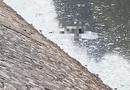 Tin trong nước - Hà Nội: Trục vớt thi thể người đàn ông nổi trên sông Kim Ngưu