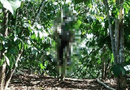Tin trong nước - Lâm Đồng: Tá hỏa phát hiện người đàn ông treo cổ trong rẫy cà phê