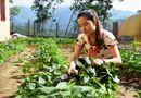 Việc tốt quanh ta - Thầy hiệu trưởng trồng rau, nuôi lợn cải thiện bữa ăn cho học trò