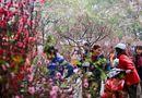 Tin trong nước - Hà Nội: Cấm đường 16 ngày liên tiếp phục vụ Tổ chức chợ Hoa Xuân năm 2020