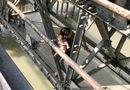 Tin trong nước - Giải cứu thành công người thanh niên ôm theo con nhỏ định nhảy cầu Long Biên