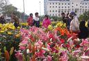 Sức khoẻ - Làm đẹp - Điểm danh những loại hoa, cây cảnh chứa chất cực độc cần cẩn thận ngày Tết