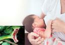 Sức khoẻ - Làm đẹp - Thực hư tin đồn rắn thích mùi sữa mẹ