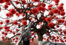 Tin thế giới - Chùm ảnh: Người dân các nước châu Á rộn ràng chuẩn bị đón năm mới Canh Tý 2020