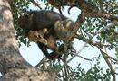 Video-Hot - Video: Khỉ đực già âu yếm ôm hôn, chăm sóc sư tử non như con đẻ