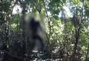 Tin trong nước - Kiên Giang: Phát hiện thi thể người đàn ông trong tư thế treo cổ trên núi Đèn