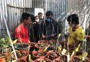 Pháp luật - Khởi tố nhóm đối tượng trộm vườn lan 4,5 tỷ đồng khiến chủ vườn ngã quỵ