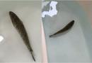 Cộng đồng mạng - Mua cá trên mạng để nấu cháo, 3 ngày sau gia chủ vẫn không được tắm rửa vì lý do không thể ngờ