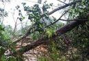 Tin trong nước - Một người tử vong, hàng ngàn ngôi nhà ở miền núi phía Bắc bị tàn phá vì mưa lớn