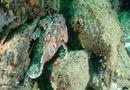 """Đời sống - Video: Bầy cá mặt quỷ phô diễn khả năng tàng hình """"thần sầu"""" dưới đáy đại dương"""