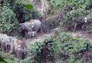 Tin trong nước - Lần đầu phát hiện cá thể voi con khoảng 1 tuổi tại Quảng Nam