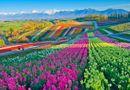 Ăn - Chơi - Những cánh đồng hoa đẹp nhất thế giới bắt đầu nở rộ