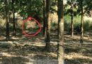 Tin trong nước - Phát hiện thi thể nam giới cháy đen trong tư thế quỳ ở rừng cao su Bình Dương