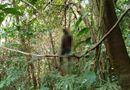 Tin trong nước - Vụ thi thể nam giới treo cổ trên đèo Bảo Lộc: Xót xa hoàn cảnh của nạn nhân