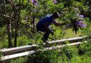 Cộng đồng mạng - Nam du khách bẻ hoa phượng tím ở Đà Lạt: Thừa nhận mình đã sai