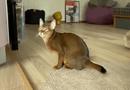 """Video-Hot - Video: Thích thú xem chú mèo mê mẩn chơi trò """"nổ bong bóng"""""""