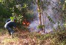 Tin trong nước - Lửa bùng phát tại 5ha rừng trồng ngay sát sân bay Đà Nẵng