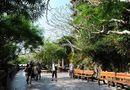 Tin trong nước - Đà Nẵng: Miễn phí vào cửa nhiều điểm tham quan để kích cầu du lịch