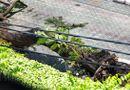 Tin trong nước - Vụ cây phượng bật gốc, đè học sinh tử vong: Phụ huynh kể lại cảnh tượng nhiều học sinh bị cây đè
