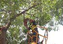 Chuyện học đường - Hà Nội yêu cầu tổng rà soát cây xanh trong trường học