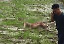 An ninh - Hình sự - Vụ thảm án 3 người chết ở Điện Biên: Phó Giám đốc Công an tỉnh nói gì?