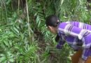 Tin trong nước - Bé sơ sinh còn dính dây rốn bị bỏ vào bụi cây ven đường, côn trùng bu kín người