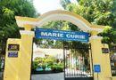 Chuyện học đường - Vụ chi phí hơn 230 triệu chặt, tỉa cây tại trường Marie Curie: Công ty cây xanh TP.HCM nói gì?