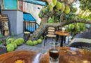 Cộng đồng mạng - Quán cà phê sở hữu cây mít quả nhung nhúc như đàn lợn con, khách đến ai cũng hỏi ông chủ câu này