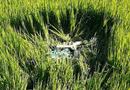 Tin trong nước - Tin tai nạn giao thông mới nhất ngày 1/8/2020: Hé lộ nguyên nhân vụ thi thể người đàn ông dưới ruộng lúa