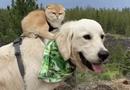 """Video-Hot - Video: Cặp chó – mèo rủ nhau đi khắp thế gian """"đốn tim"""" dân mạng vì quá đáng yêu"""