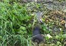 Tin trong nước - Vụ thi thể người phụ nữ nổi trên sông Sài Gòn: Nạn nhân khoảng 40 tuổi, mặc áo khoác xanh đen chấm bi