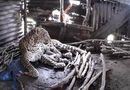 Video-Hot - Video: Báo hoang bất ngờ mò vào nhà kho để sinh con