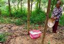 Tin trong nước - Vụ bé gái sơ sinh bị bỏ rơi ngay bìa rừng: Mảnh giấy trong giỏ nhựa màu hồng có nội dung gì?