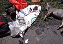 An ninh - Hình sự - Dân làng vây bắt, đánh bầm dập đối tượng trộm chó