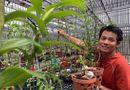 """Tin trong nước - """"Hoa mắt"""" trước vườn lan đột biến trị giá hơn 60 tỷ ở Cần Thơ"""